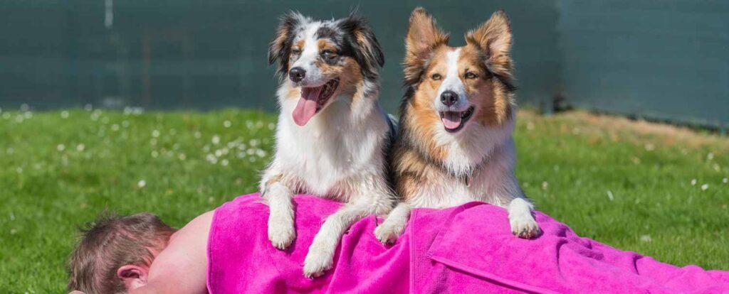 2 Hunden massieren den Hundehalter im Fritz Homann Bad