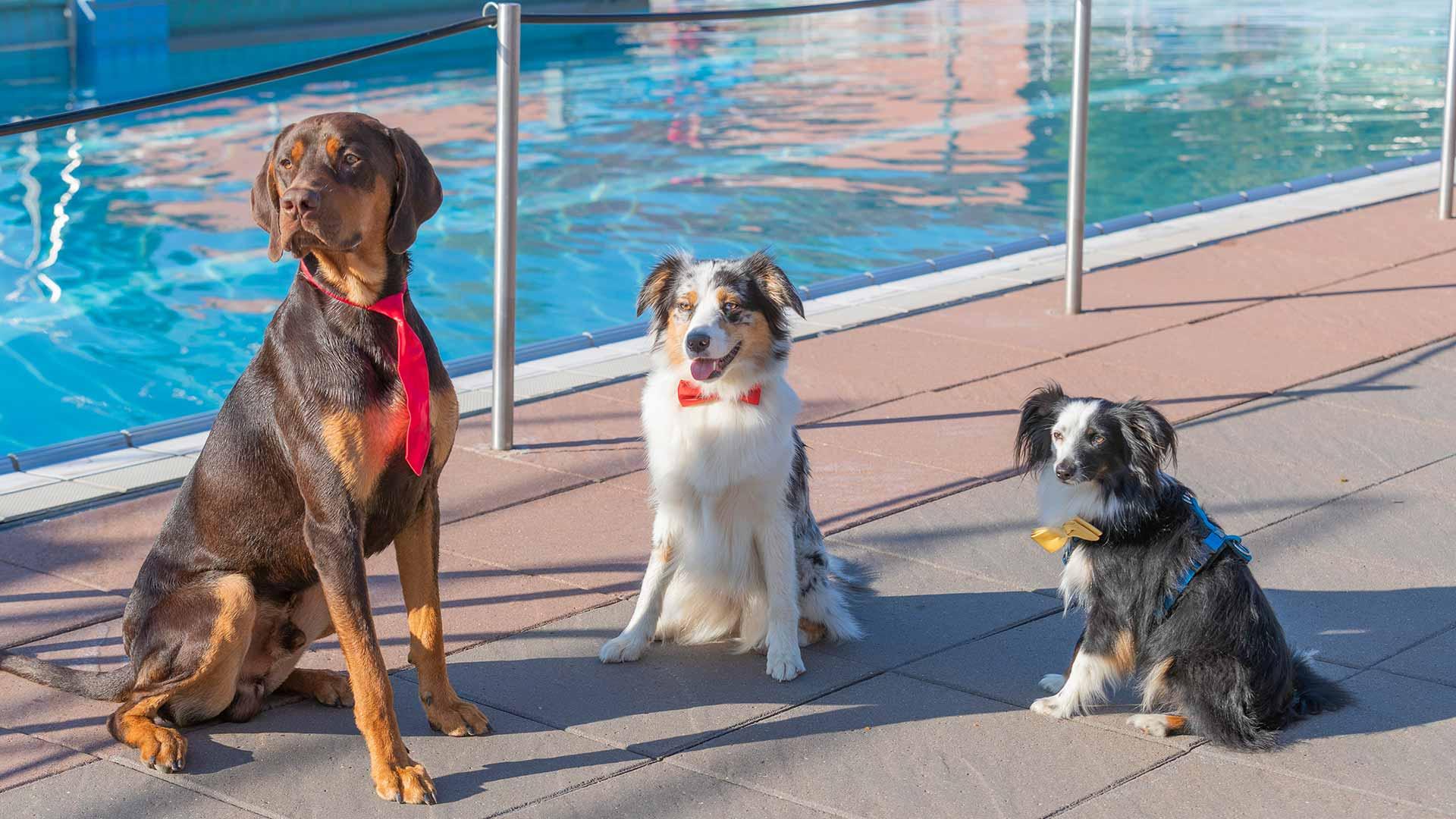 3 Hunde während des Hundeschwimmen im Fritz Homann Bad